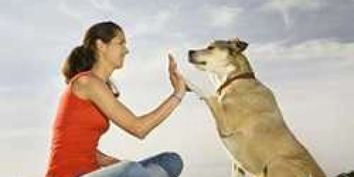 Pet Friendly Rehabs Is Useful Or Not?